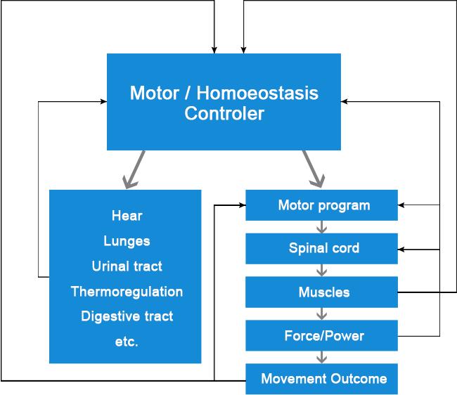 motor-homoeostasis-controler