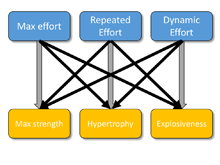 Strength Training Categorization – Part 1