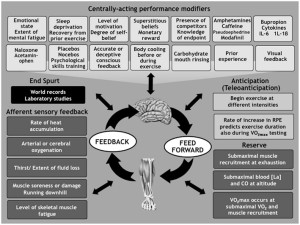 The Best Review Article on Fatigue and My Application of It