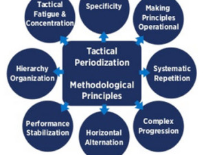 Tactical Periodization: Interview With Two of My Colleagues