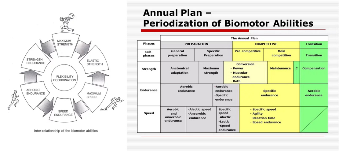 annual-plan-periodization-of-biomotor-abilities